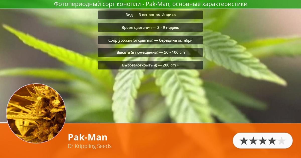 Инфограмма сорта марихуаны Pak-Man