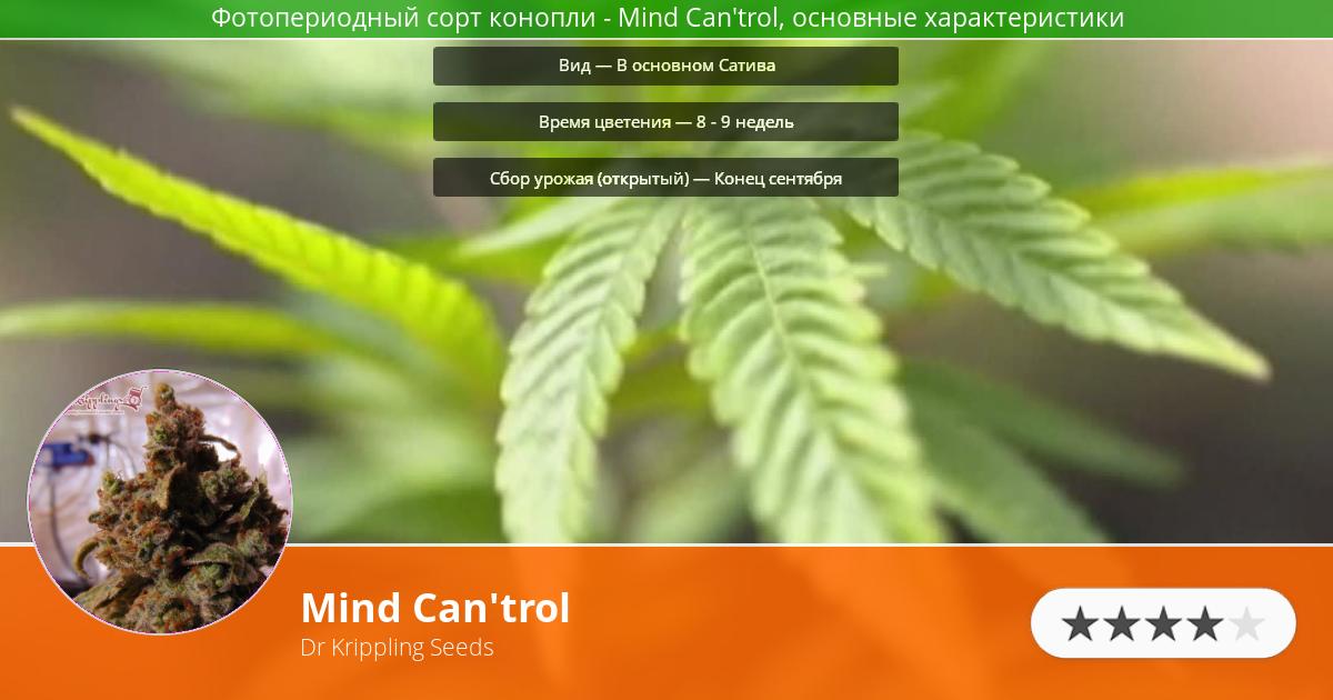 Инфограмма сорта марихуаны Mind Can'trol