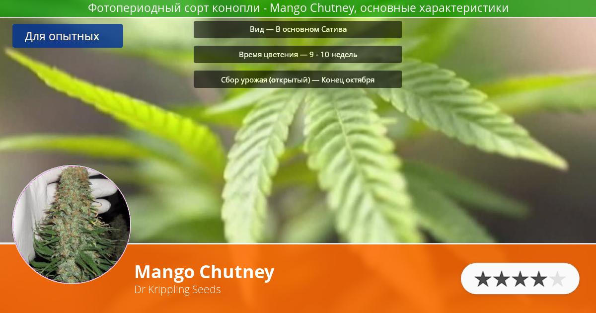Инфограмма сорта марихуаны Mango Chutney