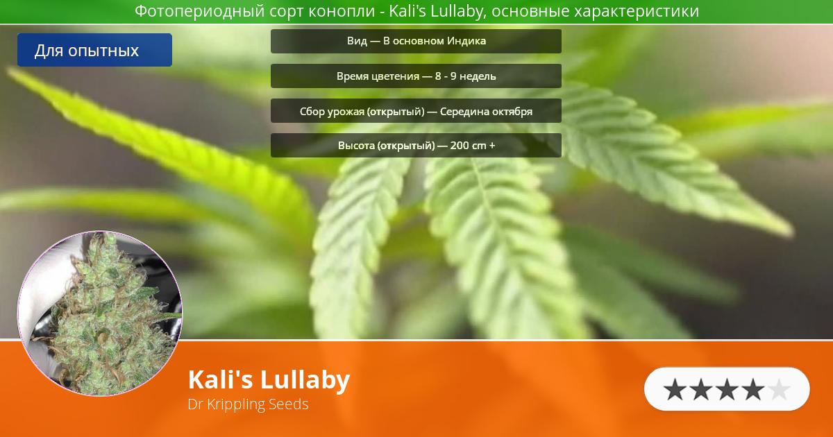 Инфограмма сорта марихуаны Kali's Lullaby