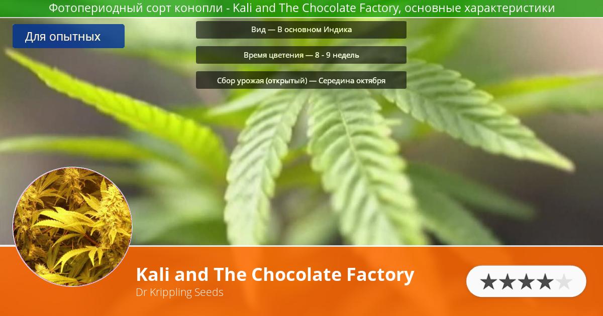 Инфограмма сорта марихуаны Kali and The Chocolate Factory