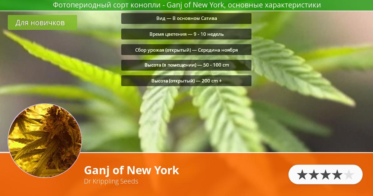 Инфограмма сорта марихуаны Ganj of New York