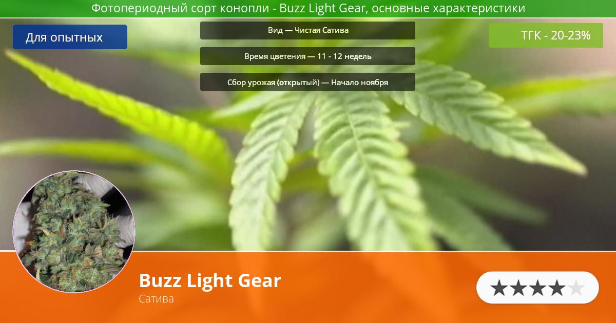 Инфограмма сорта марихуаны Buzz Light Gear