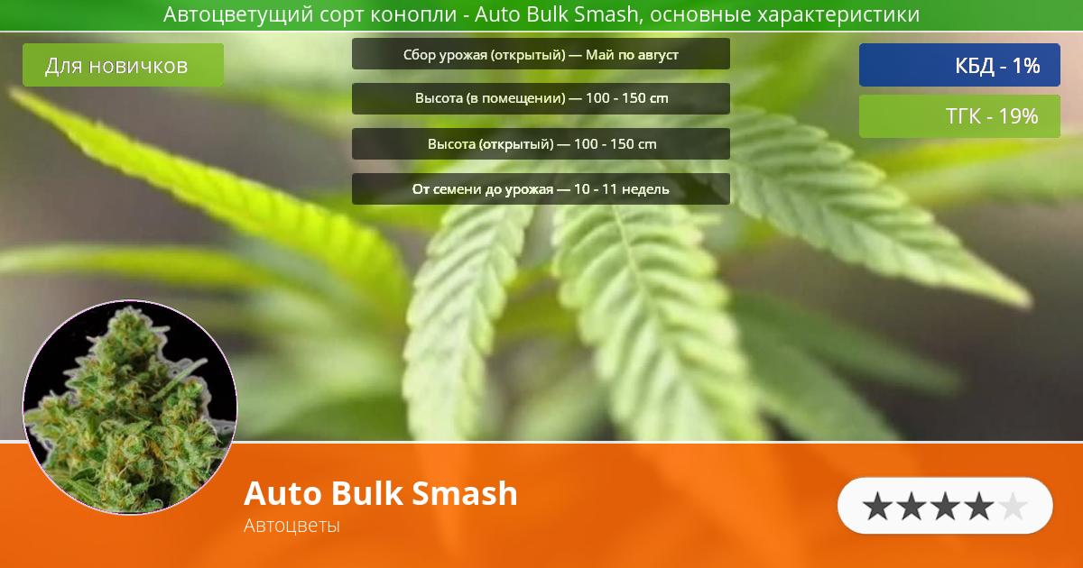 Инфограмма сорта марихуаны Auto Bulk Smash