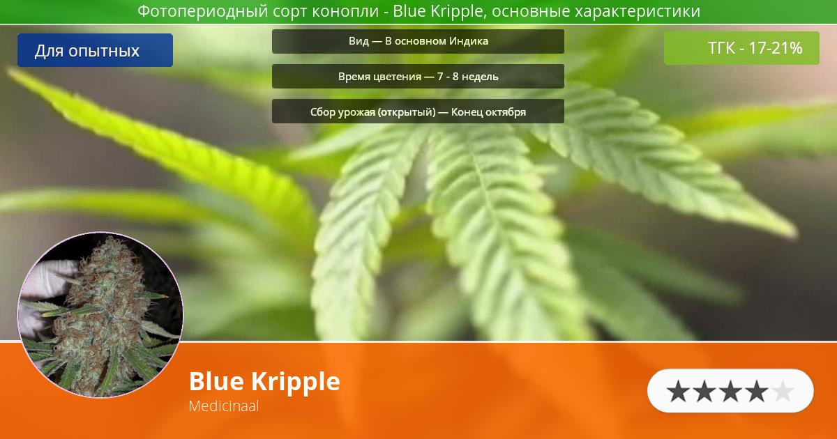 Инфограмма сорта марихуаны Blue Kripple