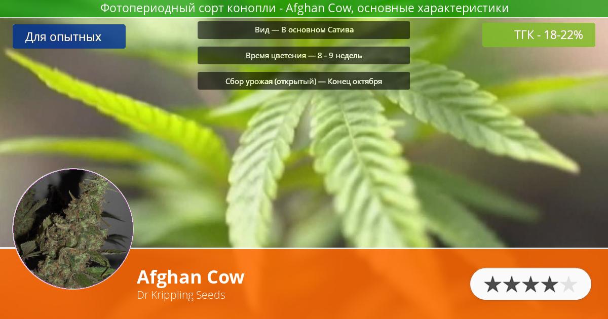 Инфограмма сорта марихуаны Afghan Cow
