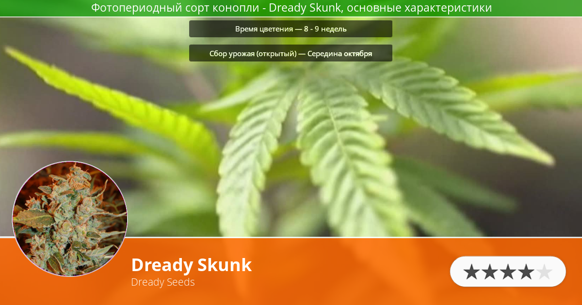 Инфограмма сорта марихуаны Dready Skunk