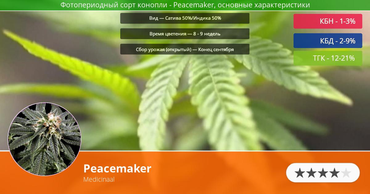 Инфограмма сорта марихуаны Peacemaker