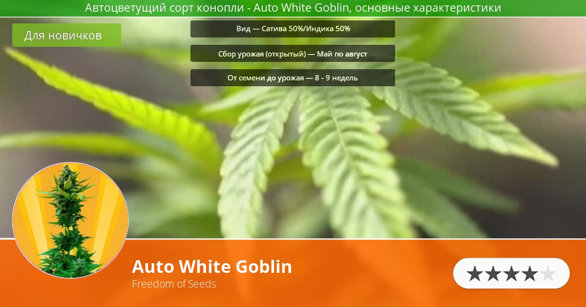 Инфограмма сорта марихуаны Auto White Goblin