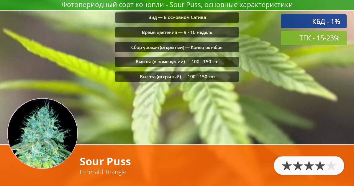 Инфограмма сорта марихуаны Sour Puss