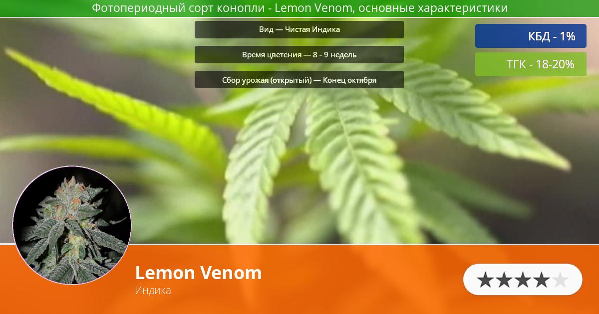 Инфограмма сорта марихуаны Lemon Venom