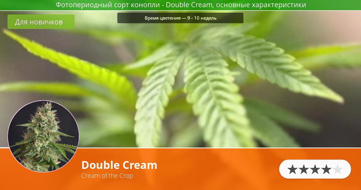 Инфограмма сорта марихуаны Double Cream