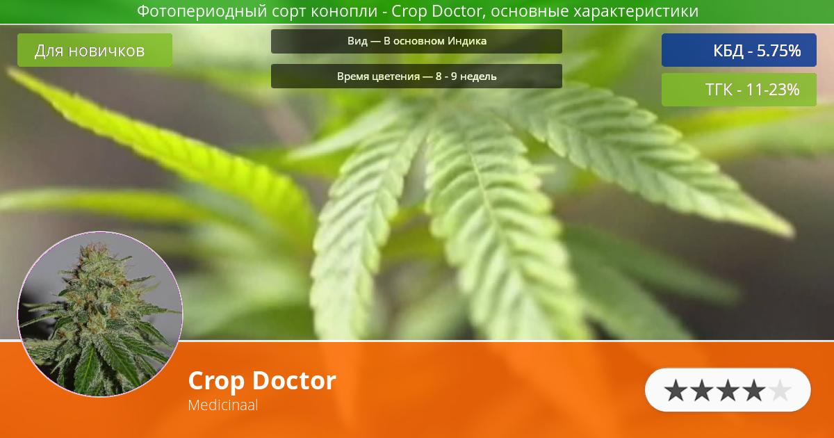 Инфограмма сорта марихуаны Crop Doctor