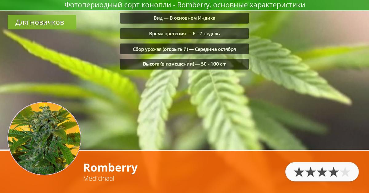 Инфограмма сорта марихуаны Romberry
