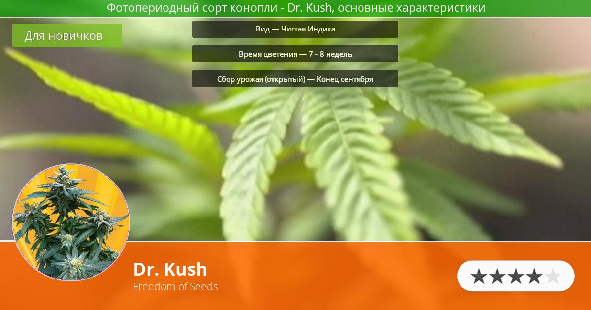 Инфограмма сорта марихуаны Dr. Kush