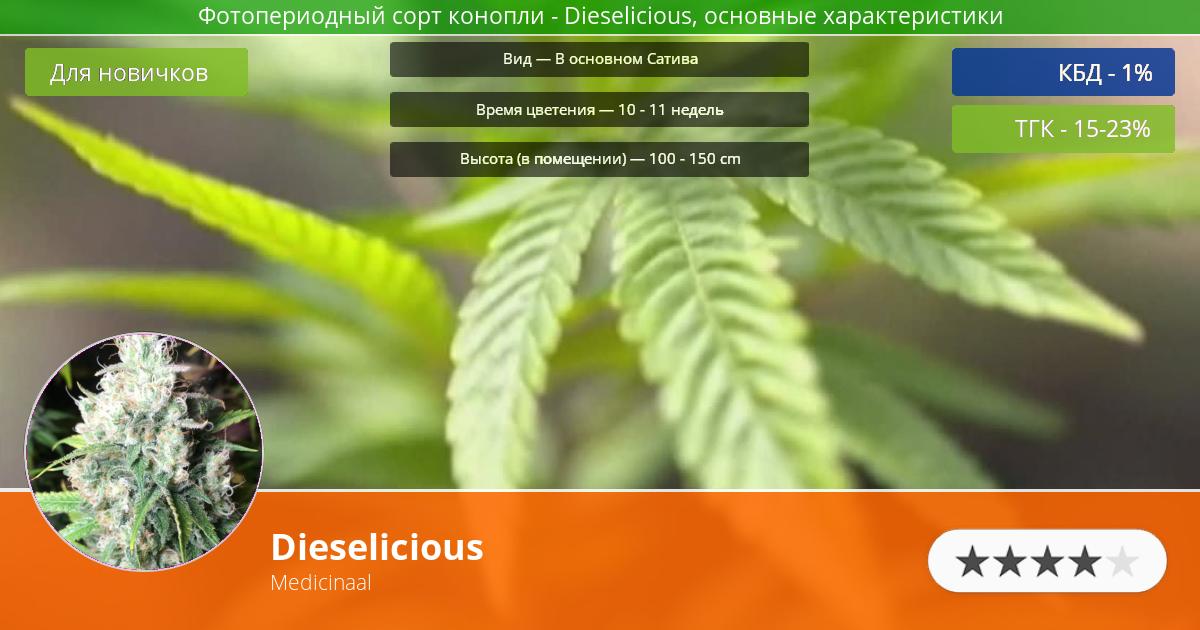 Инфограмма сорта марихуаны Dieselicious