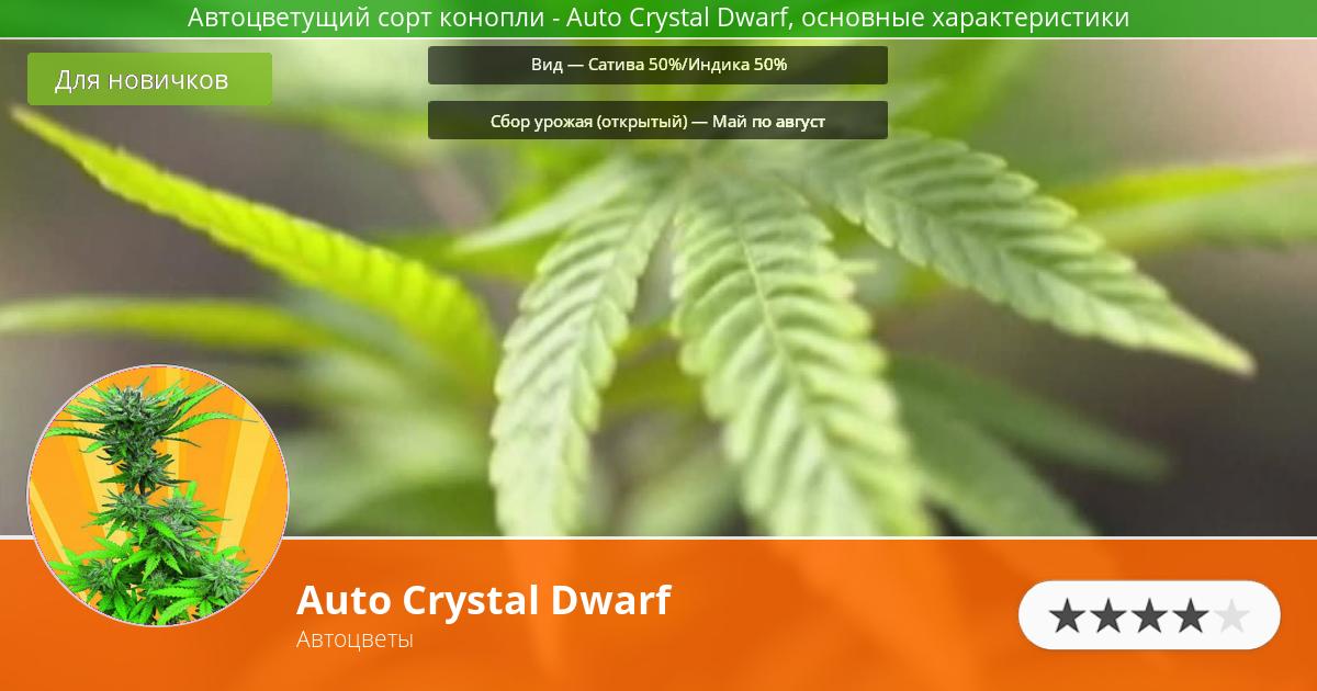 Инфограмма сорта марихуаны Auto Crystal Dwarf