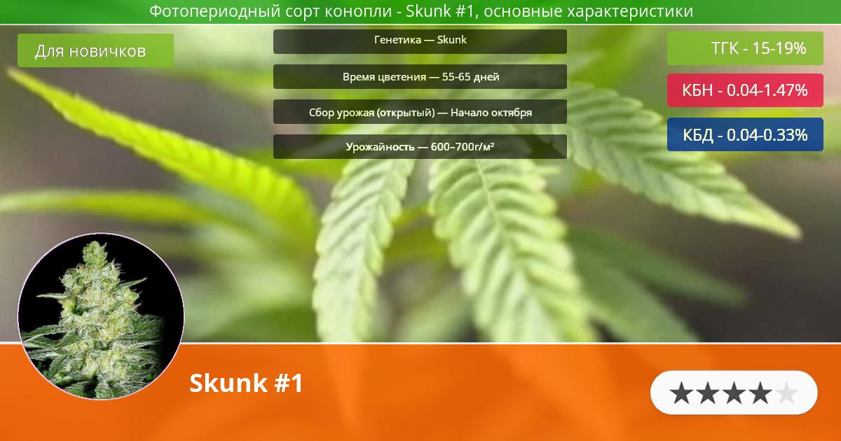 Инфограмма сорта марихуаны Skunk #1