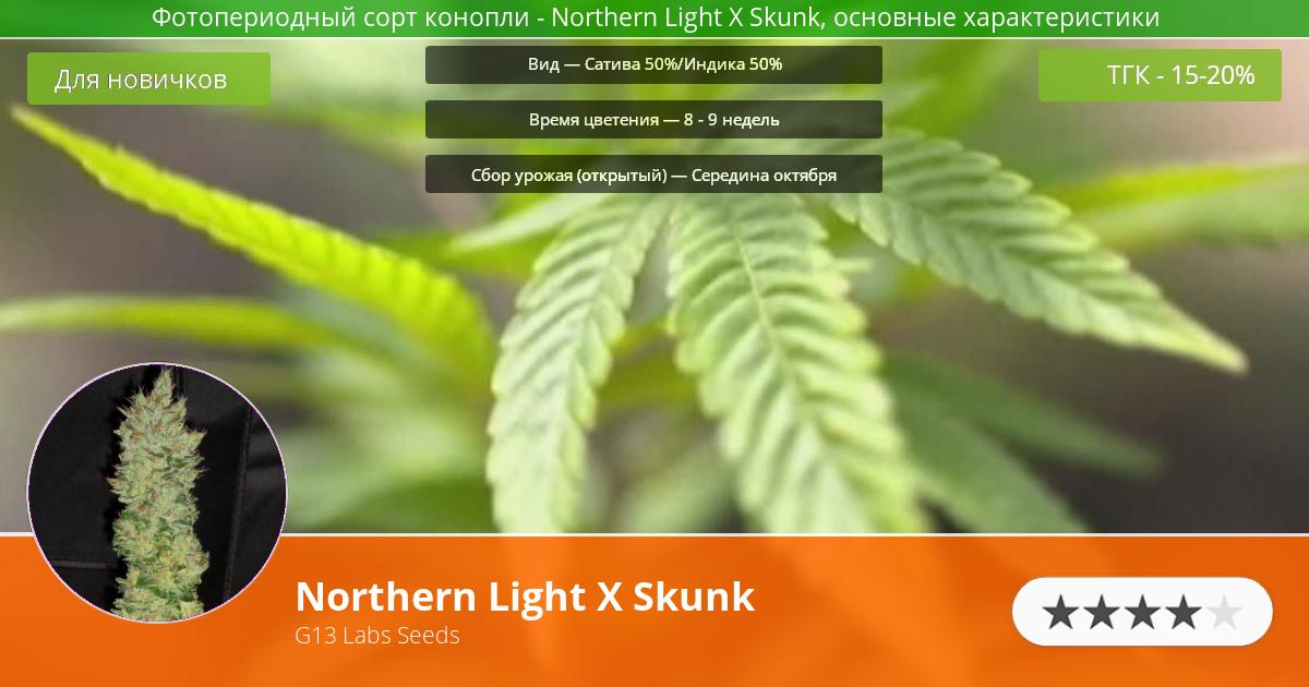 Инфограмма сорта марихуаны Northern Light X Skunk