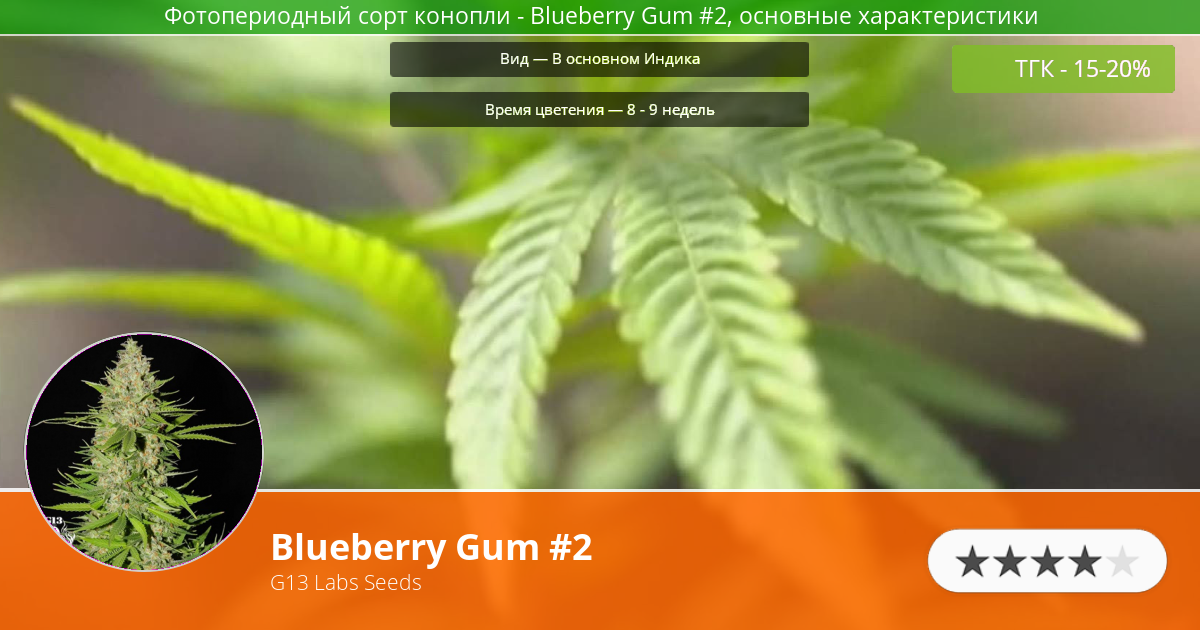 Инфограмма сорта Blueberry Gum #2
