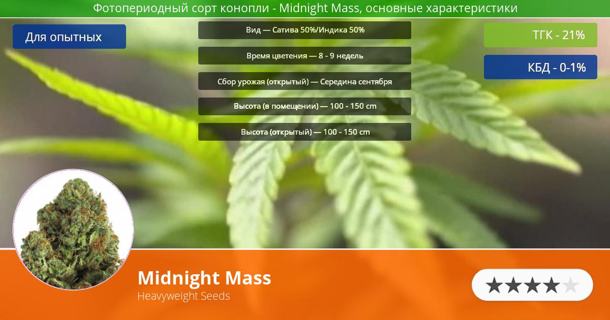 Инфограмма сорта марихуаны Midnight Mass