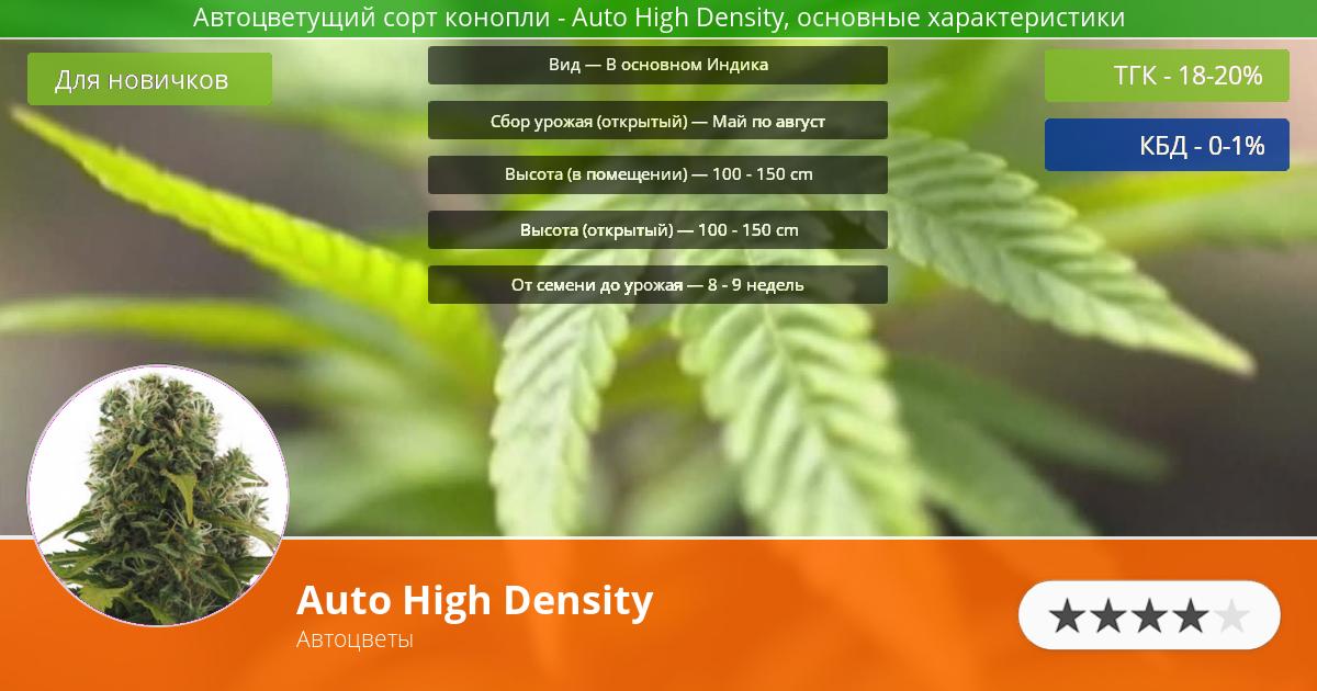 Инфограмма сорта марихуаны Auto High Density