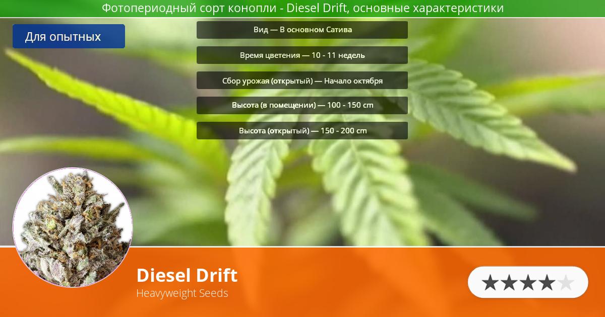 Инфограмма сорта марихуаны Diesel Drift