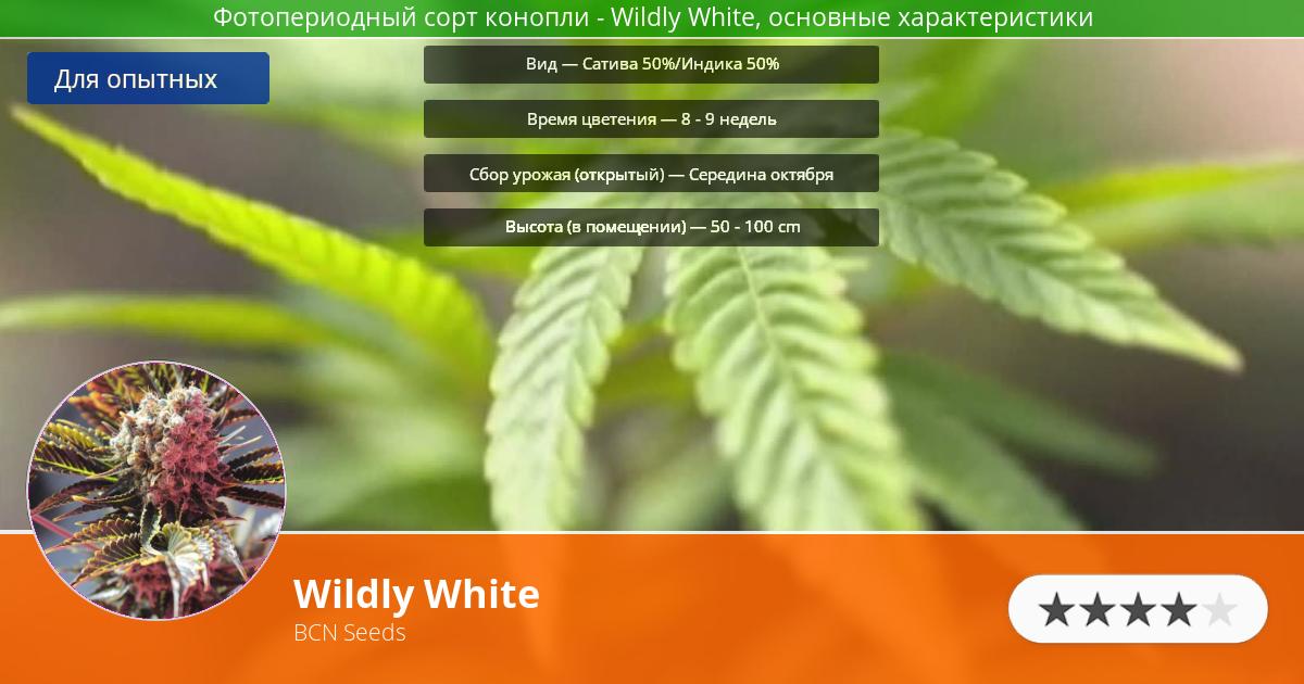Инфограмма сорта марихуаны Wildly White