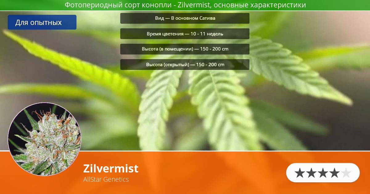 Инфограмма сорта марихуаны Zilvermist