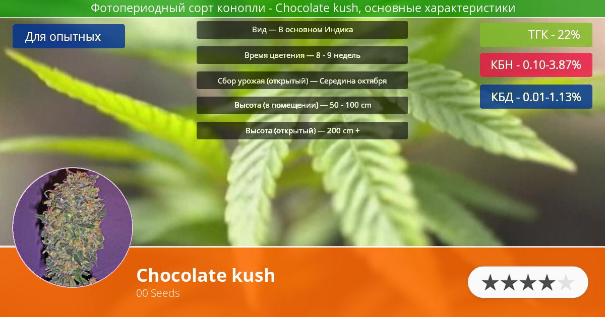 Инфограмма сорта марихуаны Chocolate kush