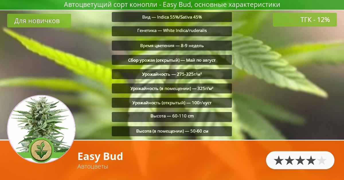 Инфограмма сорта марихуаны Easy Bud