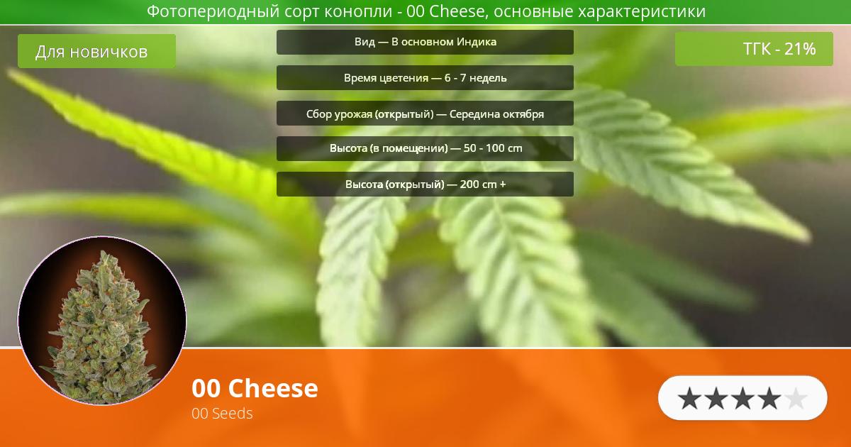 Инфограмма сорта марихуаны 00 Cheese