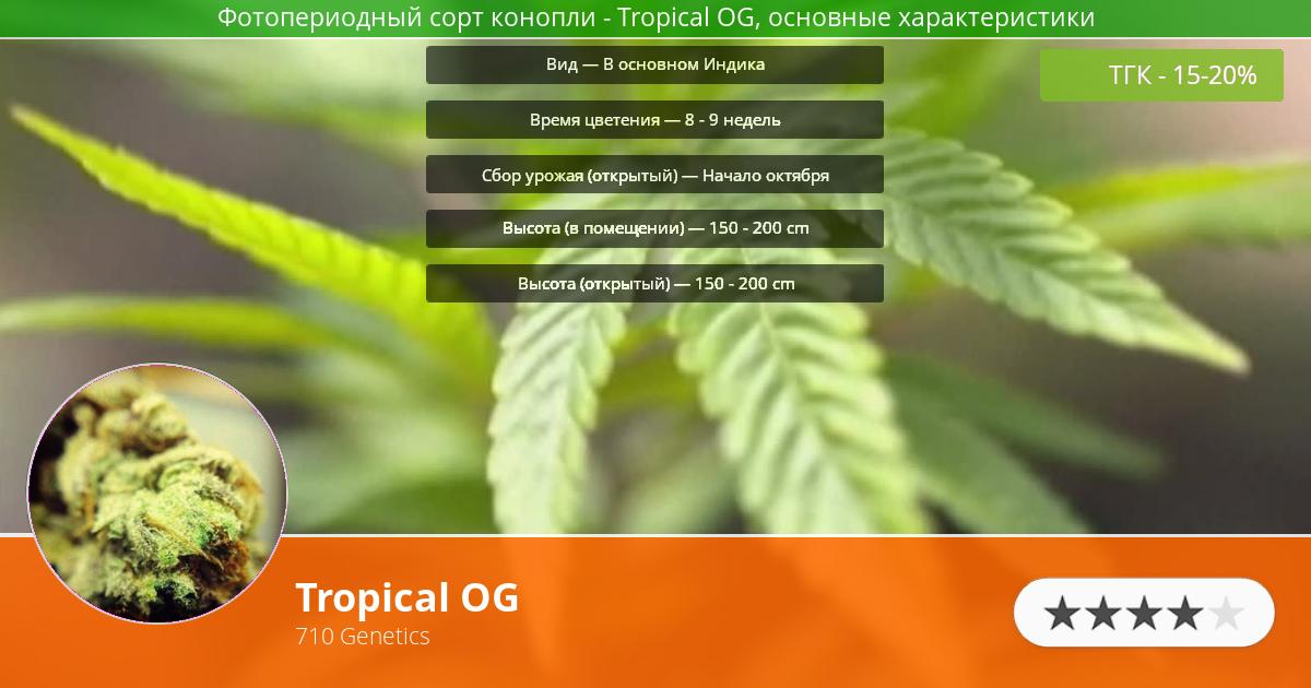 Инфограмма сорта марихуаны Tropical OG