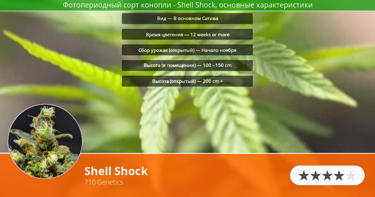Инфограмма сорта марихуаны Shell Shock