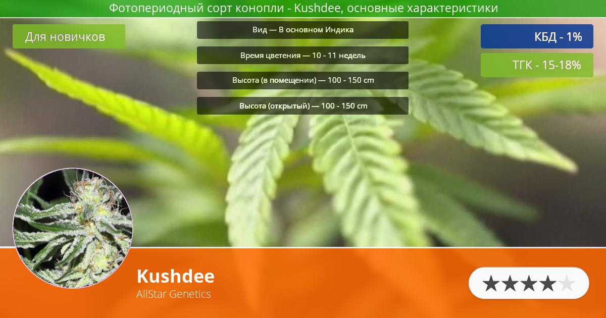 Инфограмма сорта марихуаны Kushdee