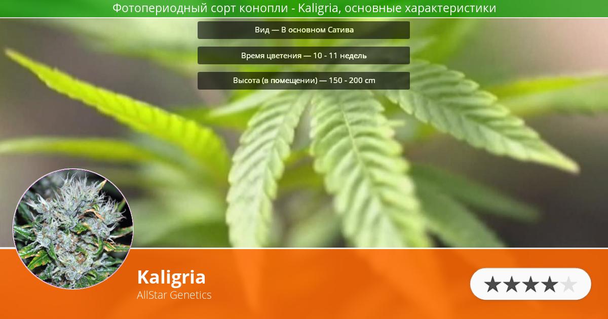 Инфограмма сорта марихуаны Kaligria